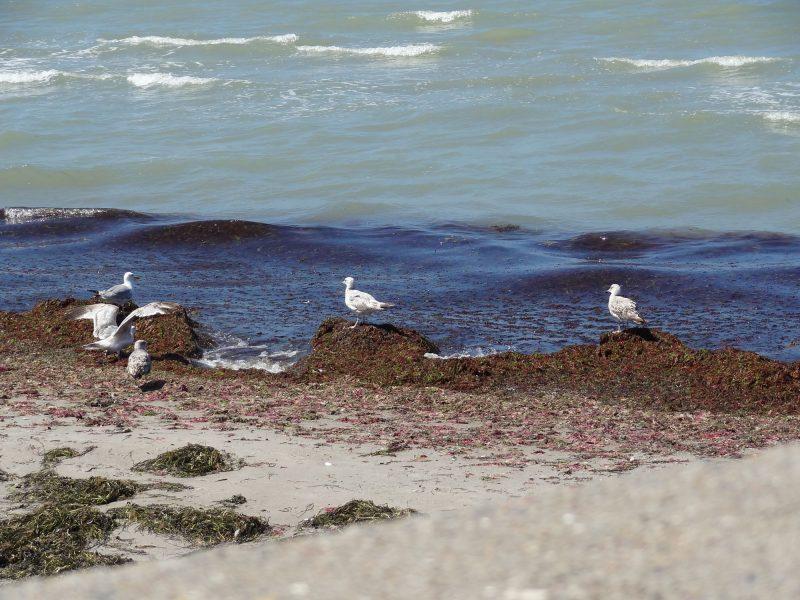Group os seagulls on a beach.