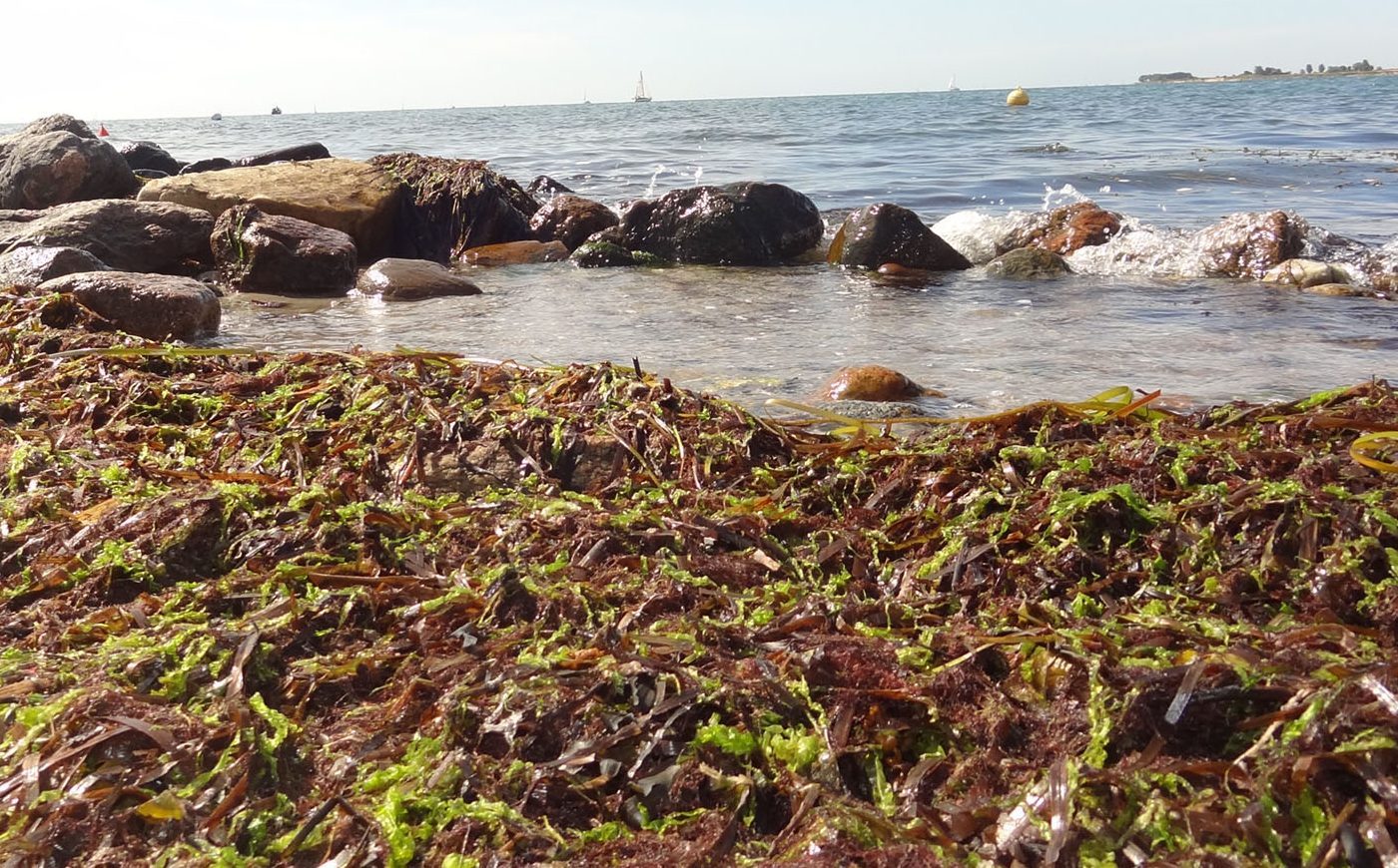 A shoreline with a seagrass and rocks.