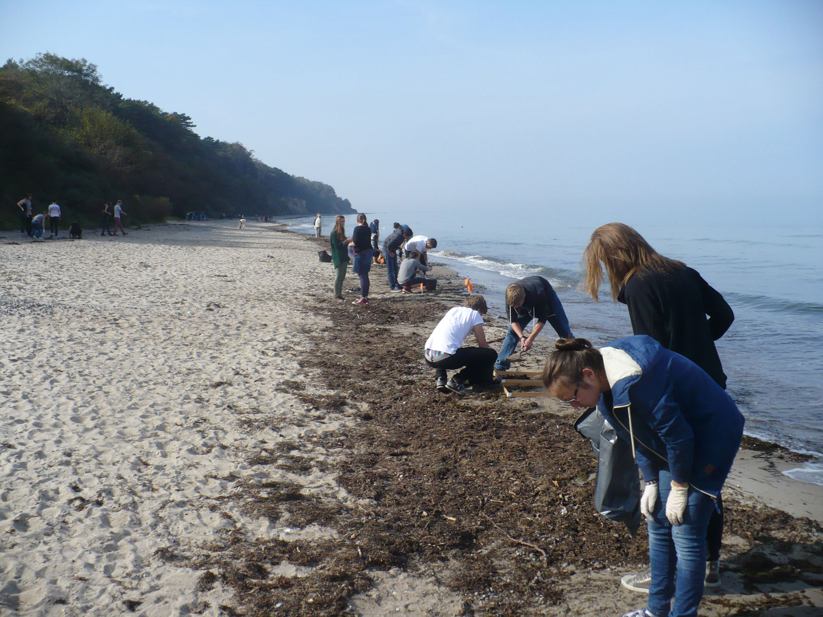 People on a beach are looking at seagrass.